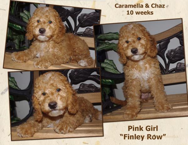 Pink Girl 10 week Collagewatermark.jpg