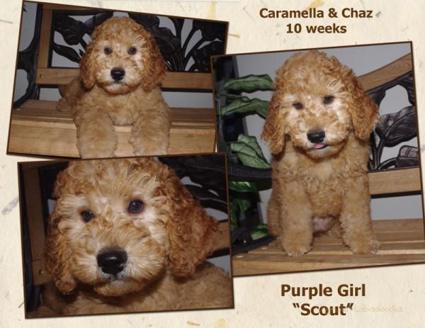 Purple Girl 10 week Collagewatermark.jpg