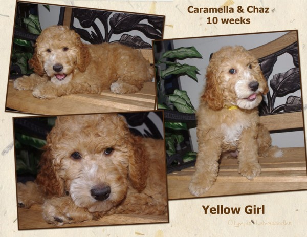 Yellow Girl 10 week Collagewatermark.jpg