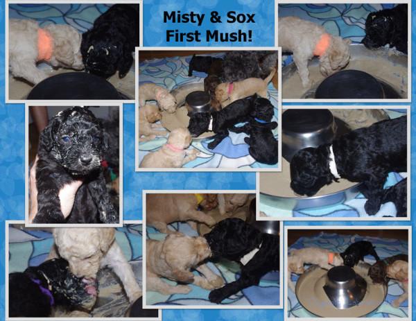 Misty Pups First Mush Page 1watermark.jpg
