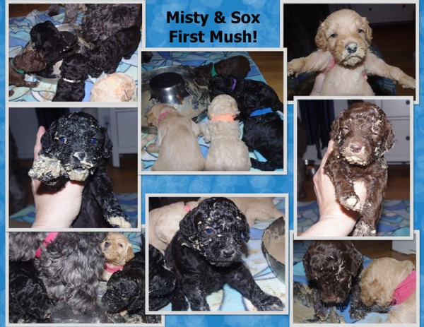 Misty Pups First Mush Page 2watermark.jpg