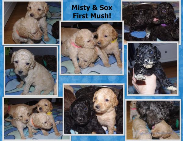 Misty Pups First Mush Page 3watermark.jpg