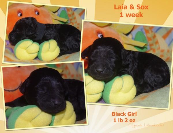 Black Girl 1 week Collagewatermark.jpg