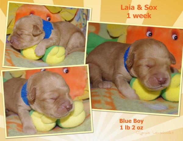 Blue Boy 1 week Collagewatermark.jpg