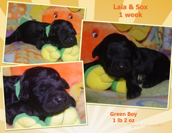 Green Boy 1 week Collagewatermark.jpg