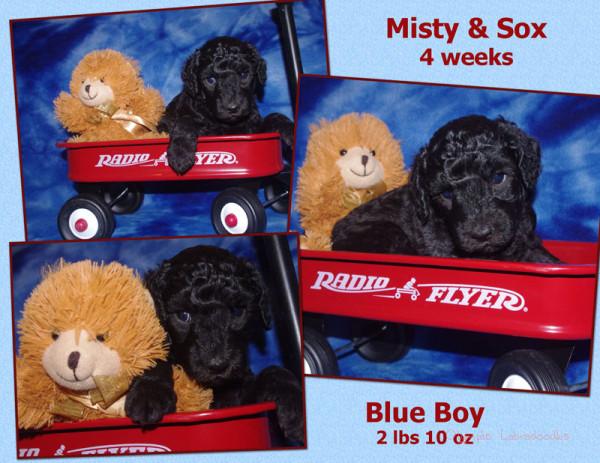 Blue Boy 4 week Collagewatermark.jpg