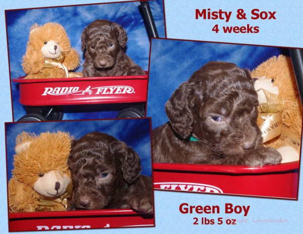 Green Boy 4 week Collagewatermark.jpg