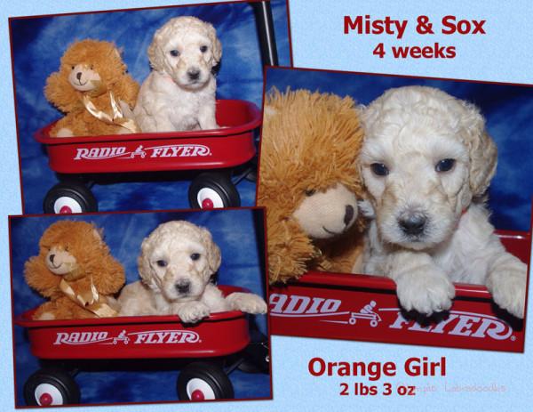 Orange Girl 4 week Collagewatermark.jpg