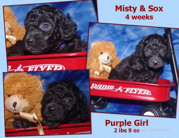 Purple Girl 4 week Collagewatermark.jpg