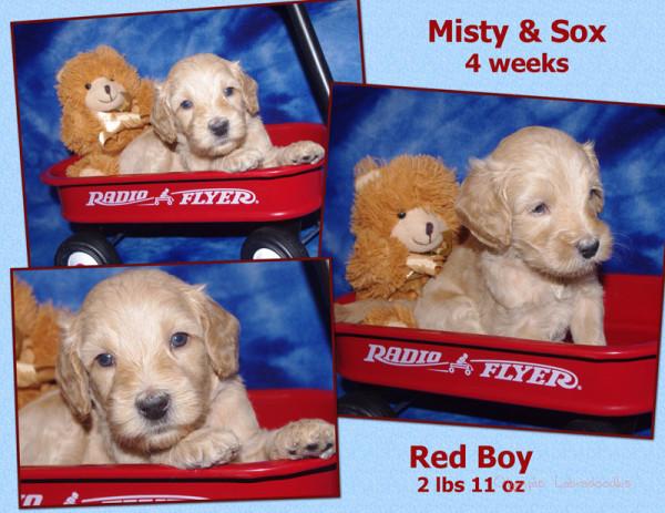 Red Boy 4 week Collagewatermark.jpg