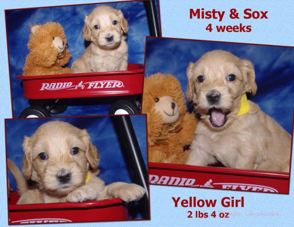 Yellow Girl 4 week Collagewatermark.jpg