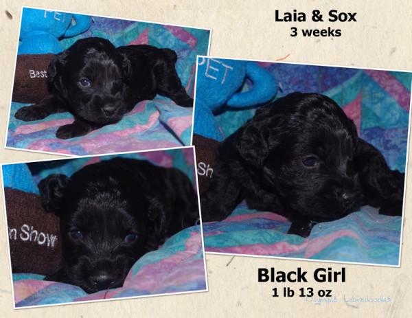 Black Girl 3 week Collagewatermark.jpg