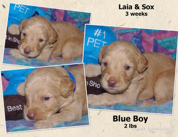 Blue Boy 3 week Collagewatermark.jpg