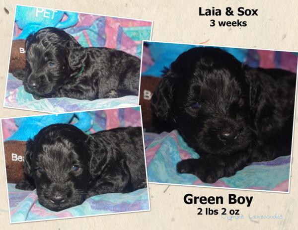 Green Boy 3 week Collagewatermark.jpg