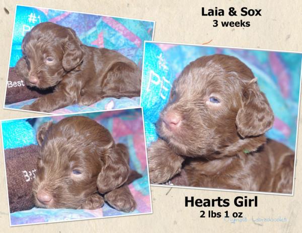 Hearts Girl 3 week Collagewatermark.jpg