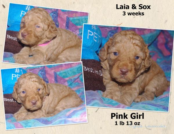 Pink Girl 3 week Colagewatermark.jpg