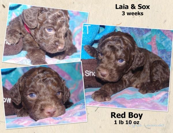 Red Boy 3 week Collagewatermark.jpg