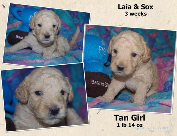 Tan Girl 3 week Collagewatermark.jpg
