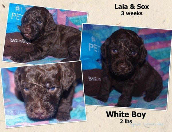 White Boy 3 week Collagewatermark.jpg