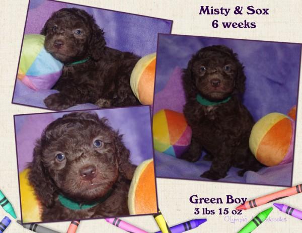 Green Boy 6 week Collagewatermark.jpg