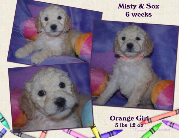 Orange Girl 6 week Collagewatermark.jpg