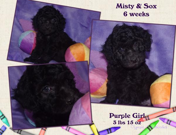 Purple Girl 6 week Collagewatermark.jpg