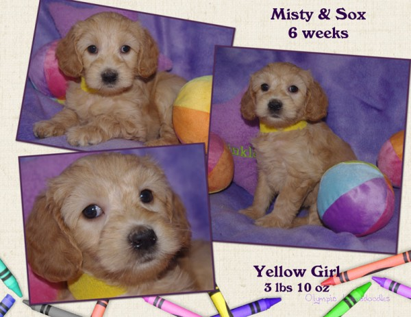 Yellow Girl 6 week Collagewatermark.jpg