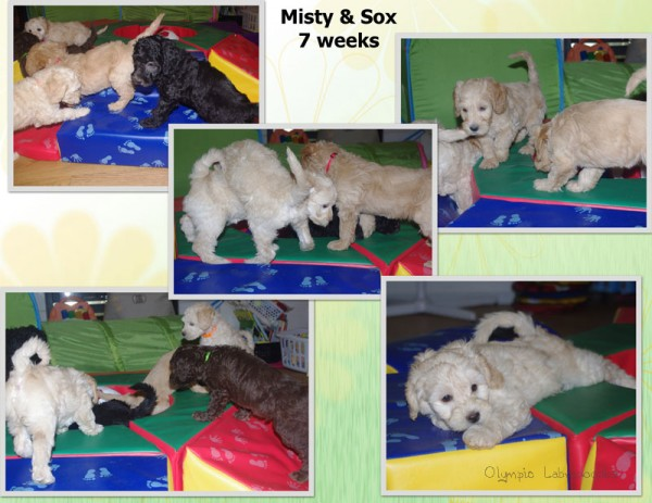 Misty Play Collage Page 1watermark.jpg