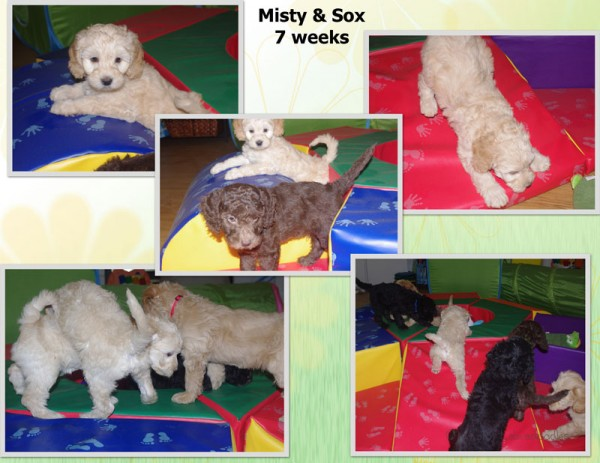 Misty Play Collage Page 2watermark.jpg