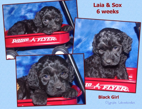 Black Girl 6 week Collagewatermark.jpg