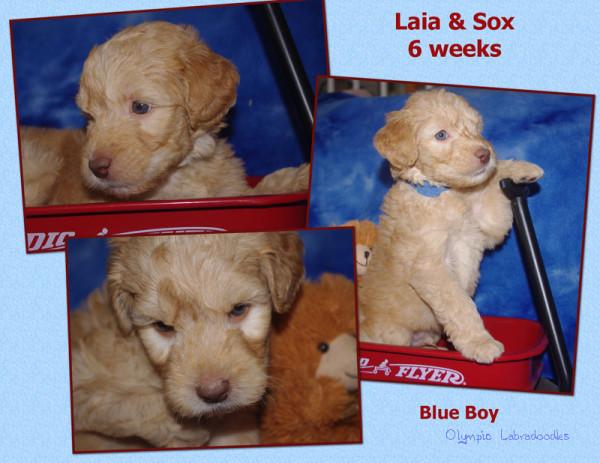 Blue Boy 6 week Collagewatermark.jpg