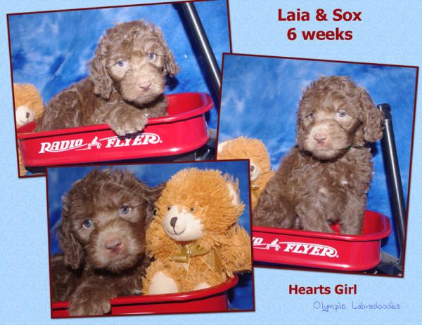 Hearts Girl 6 week Collagewatermark.jpg