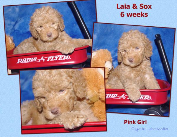 Pink Girl 6 week Collagewatermark.jpg