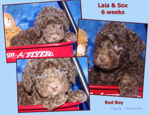 Red Boy 6 week Collagewatermark.jpg