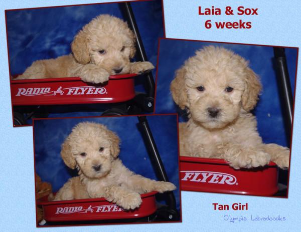 Tan Girl 6 week Collagewatermark.jpg