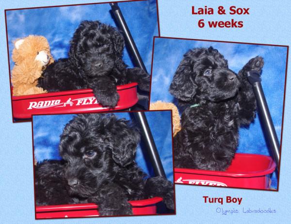 Turq Boy 6 weeks watermark.jpg