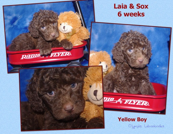 Yellow Boy 6 week Collagewatermark.jpg