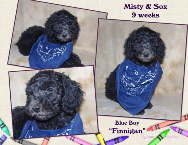 Blue Boy 9 week Collagewatermark.jpg