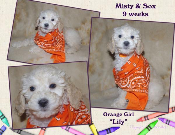 Orange Girl 9 week Collagewatermark.jpg