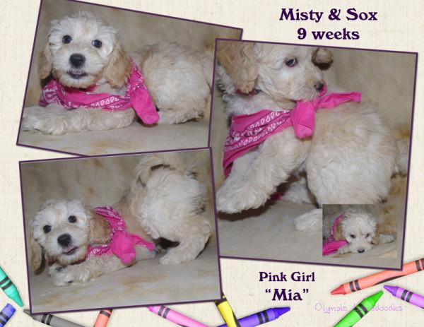 Pink Girl 9 week Collagewatermark.jpg