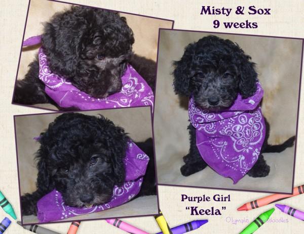 Purple Girl 9 week Collagewatermark.jpg