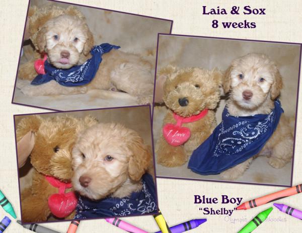 Blue Boy 8 week Collagewatermark.jpg