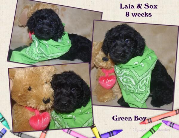 Green Boy 8 week Collagewatermark.jpg