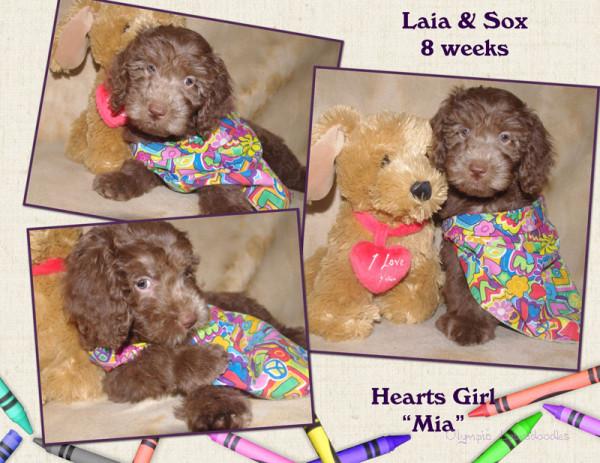 Hearts Girl 8 week Collagewatermark.jpg