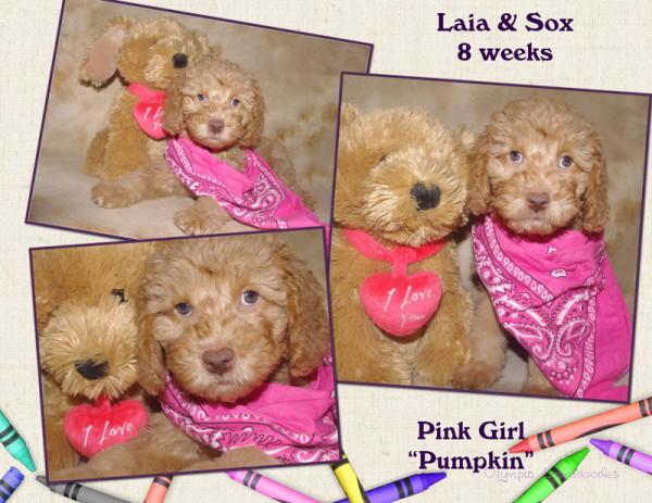 Pink Girl 8 week Collagewatermark.jpg
