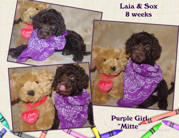 Purple Girl 8 week Collagewatermark.jpg
