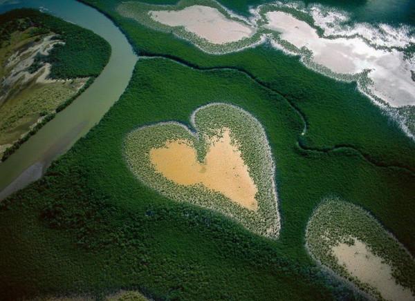 Сердце из мангровых деревьев в Новой Каледонии.