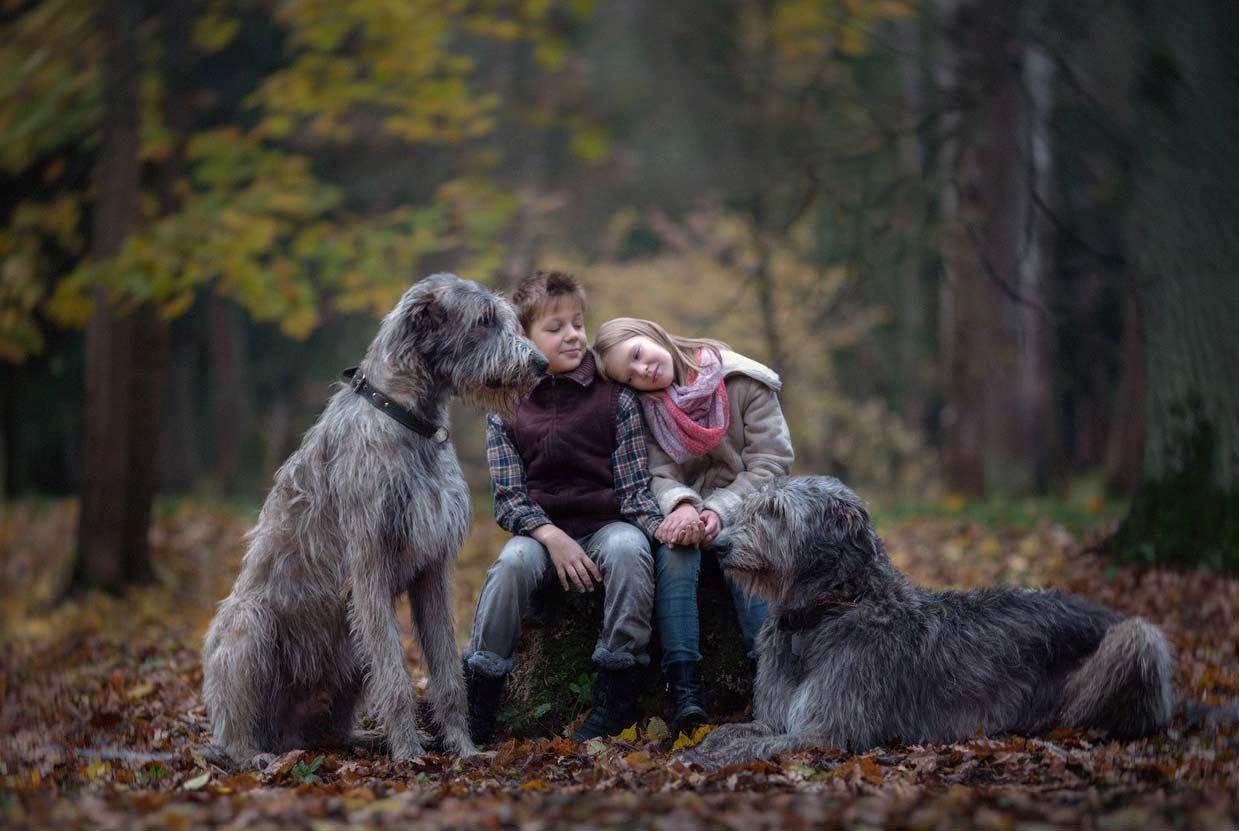 Осенний парк Ирландии и дети гуляющие с ирландскими волкодавами.