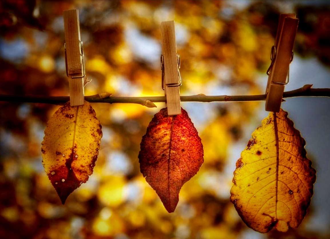 Осенние листья на дереве.