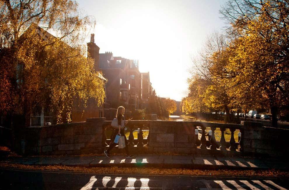 Вдоль дорог можно наблюдать целые ручьи из желтых листьев. Осенний Дублин.